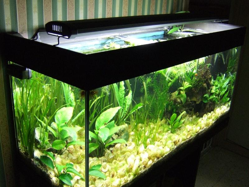 Crevettes et bac ouvert est ce possible for Aquarium ouvert