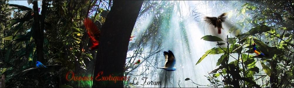 Forum Les oiseaux exotiques