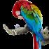 Nos bêtes à plumes