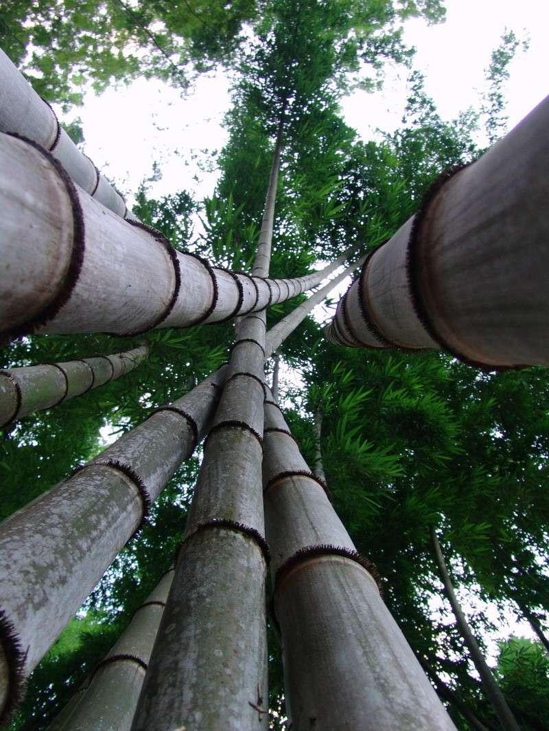 Contour De Balcon En Bambou le béton armé du bambou - matériaux & matériels - civilmania