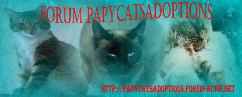 PAPYCATS adoptions de chats ag�s