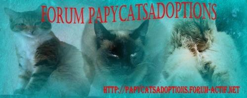 PAPYCATS adoptions de chats agés