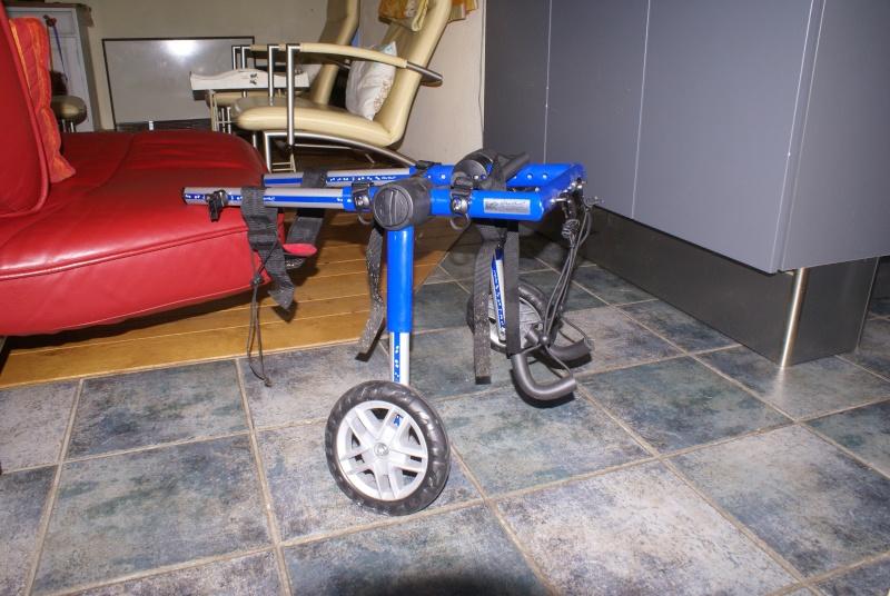 chariot pour chien handicap d occasion table de lit. Black Bedroom Furniture Sets. Home Design Ideas
