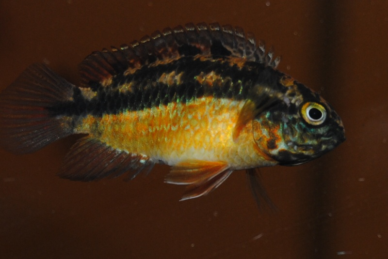 Mon bac amazonien 840 litres photos discus du 29 10 12 for Bac a poisson 2000l
