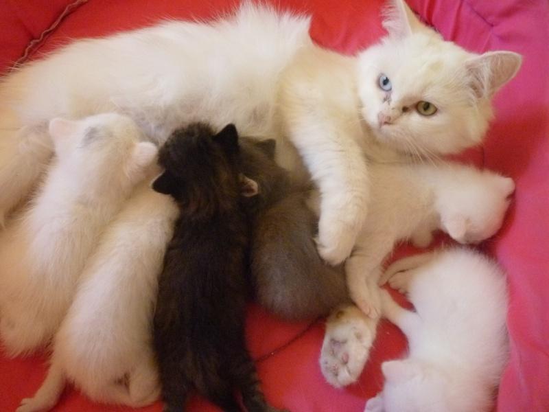 chaton blanc besoin de conseils pour un probl me la patte et pour la surdit. Black Bedroom Furniture Sets. Home Design Ideas