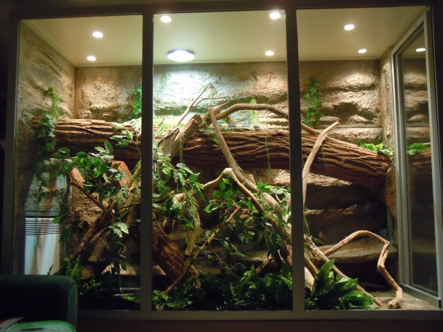mes reptiles avec leur terrarium. Black Bedroom Furniture Sets. Home Design Ideas