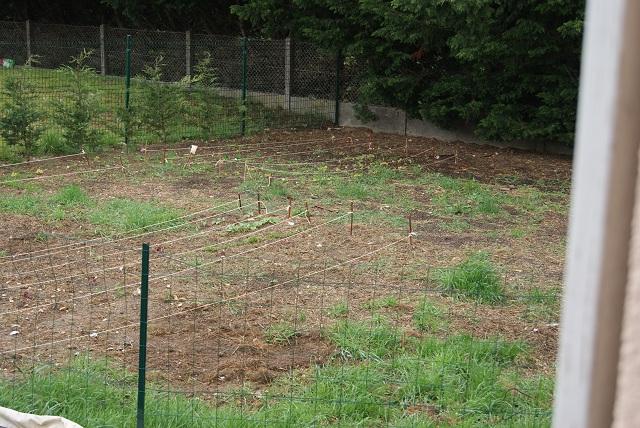 Le potager de naturalys for Jardin potager 78