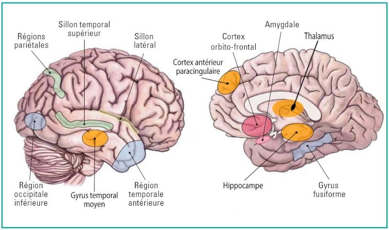 Re: La neurogénèse dans le système nerveux central