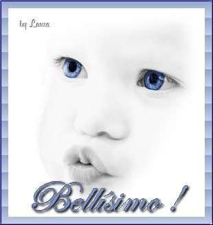 bellis10.jpg