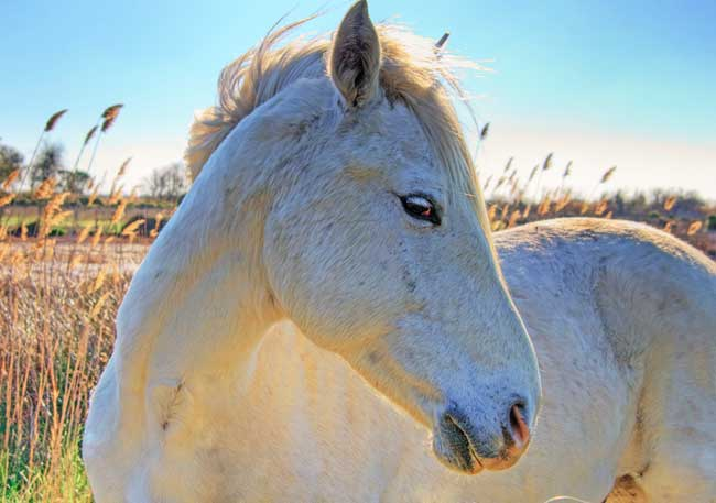 cheval13.jpg