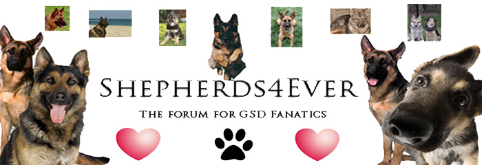 Shepherds4Ever