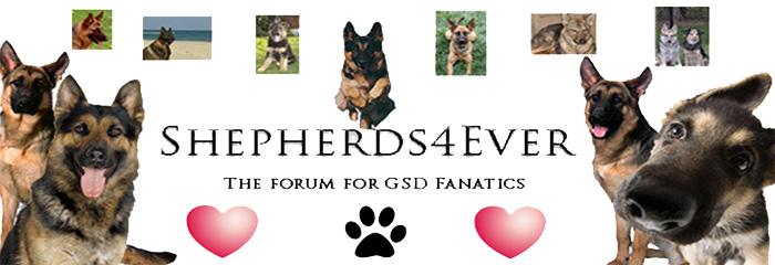 Shepherds4Ever