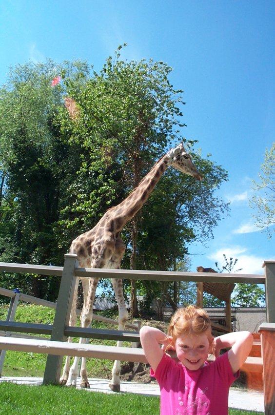 girafe10.jpg