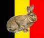 Les Races Belges