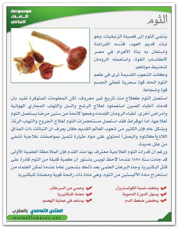 فوائد استعمالات الثوم fo-03510.jpg