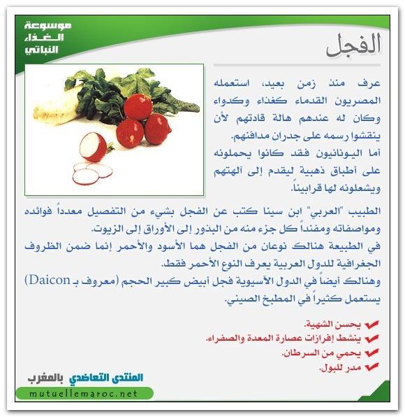 فوائد استعمالات الفجل fo-04410.jpg