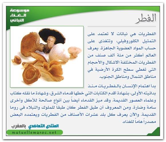 فوائد استعمالات الفطر fo-04510.jpg