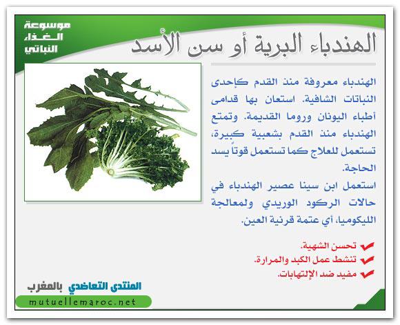 فوائد استعمالات الهندباء البرية الأسد fo-05110.png