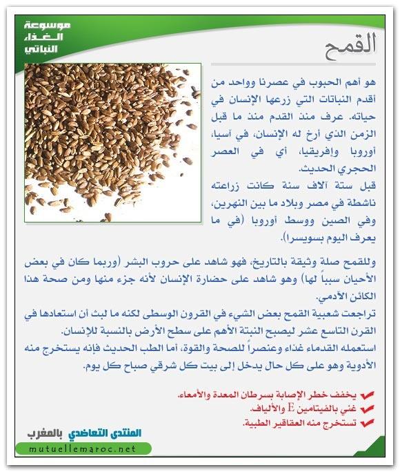 فوائد استعمالات القمح fo-06210.jpg