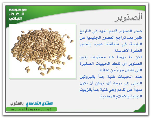 فوائد استعمالات الصنوبر fo-06810.png