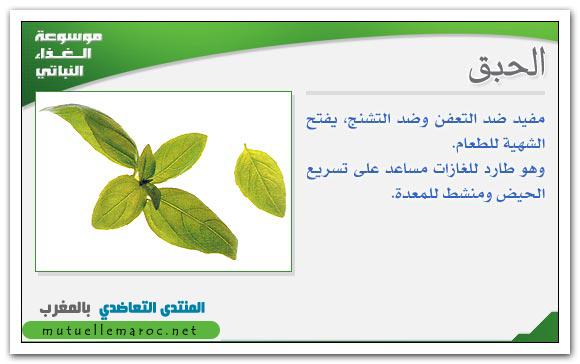 فوائد استعمالات الحبق fo-08310.png