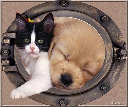 mi-chat mi-chien