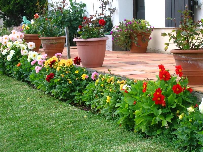 Dahlia : entretien du printemps l hiver - Jardiner Malin