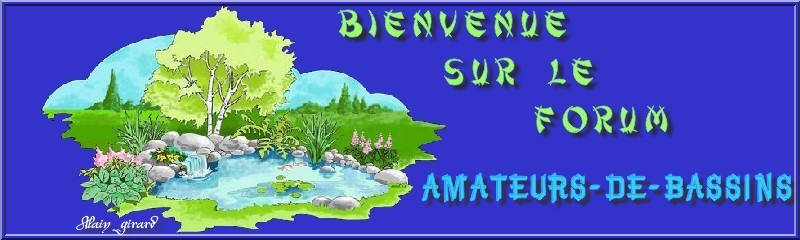 amateurs de bassins