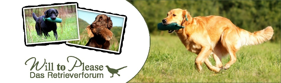 Retriever Forum -will to please-