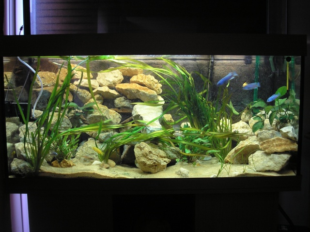 Decor Artificiel Aquarium