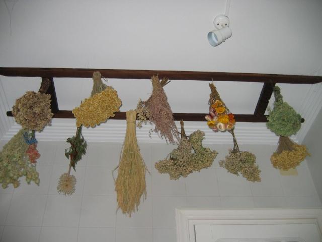 Como secar flores de hortensia - Como secar hortensias ...