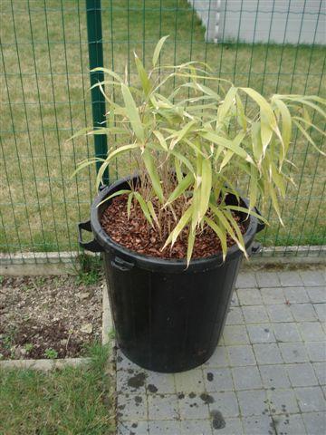 bamboe10.jpg