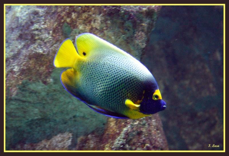 Leszoosdanslemonde afficher le sujet aquarium de lyon for Acheter poisson rouge lyon