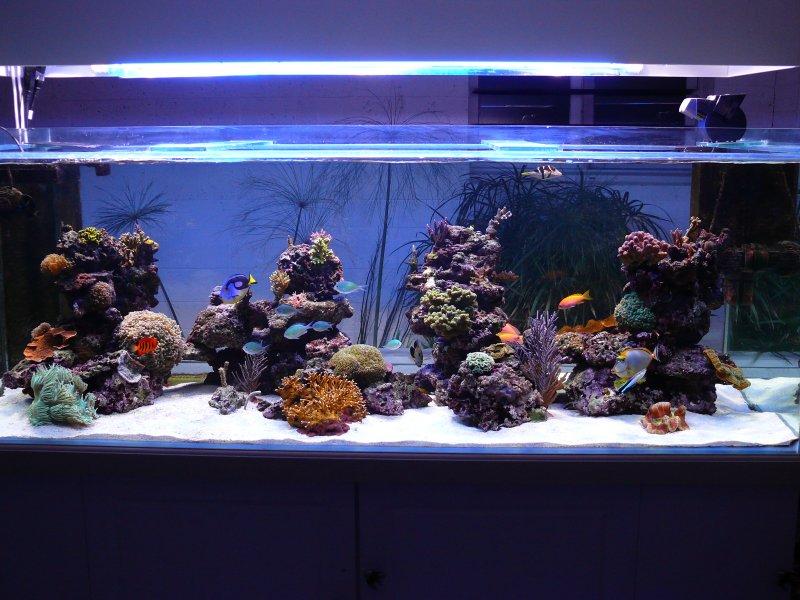 Aquario philrecifal les bacs du cra for Bac a poisson 500l