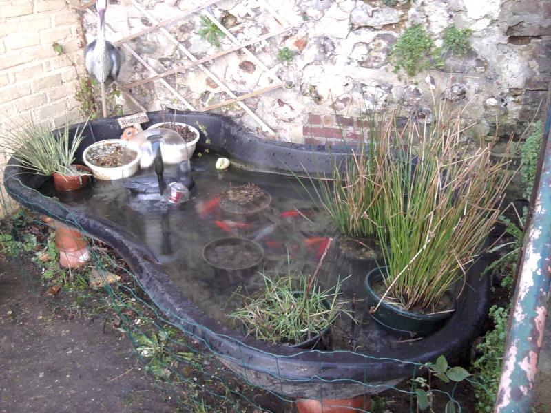 Tortue pour mon bassin for Bassin exterieur pour tortue