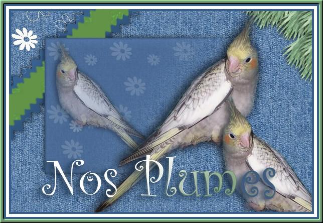 Nos plumes Forum cockatiels (calopsittes)