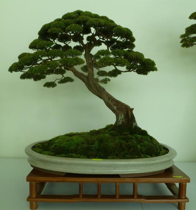 The unique of bonsai show 2012 15 mar 15apr putrajaya for Cool bonsai tree