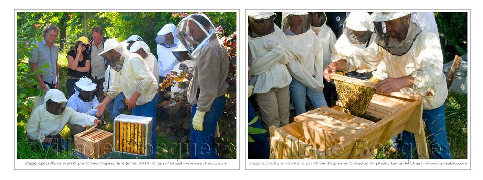منتديات النحلة الذهبية لتربية النحل