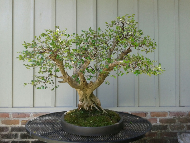Live oaks and boxwoods page