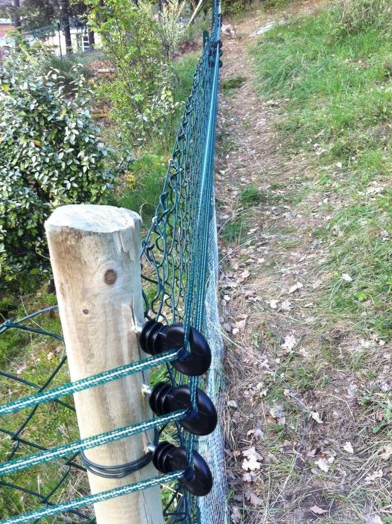 clôture électrique anti-chat