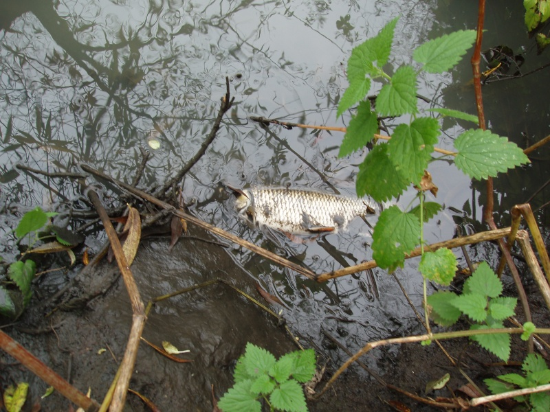 Crane fish kill