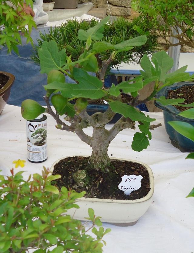 Expo Plantes Serignan Du Comptat Page 2