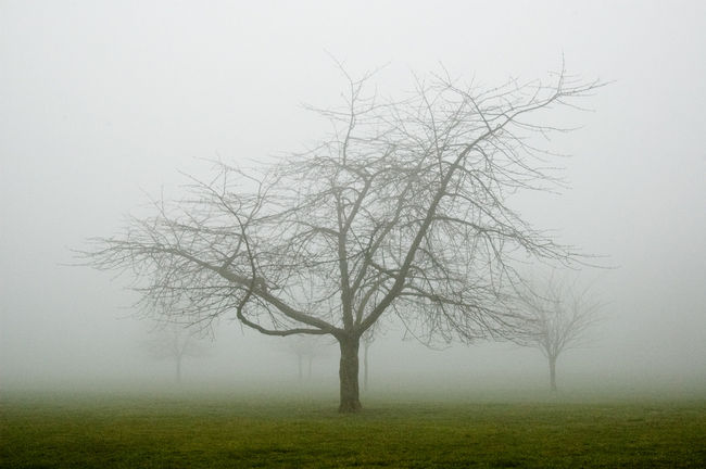 arbre-10 dans Life