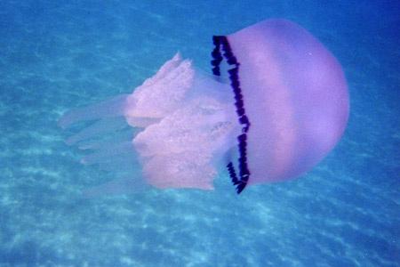 Le vent en poupe... dans Amore medusa10