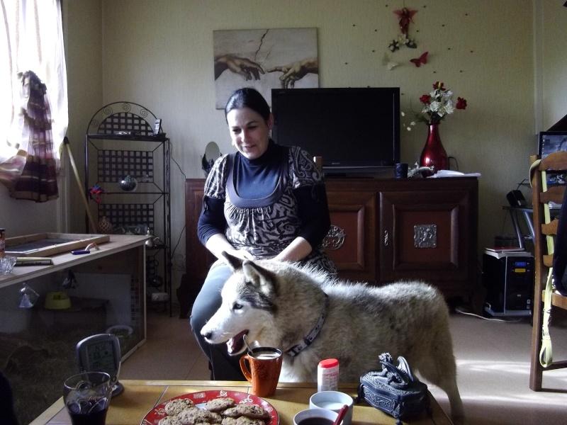 Montche superbe Husky siberien, calme, 15 ans REF (76
