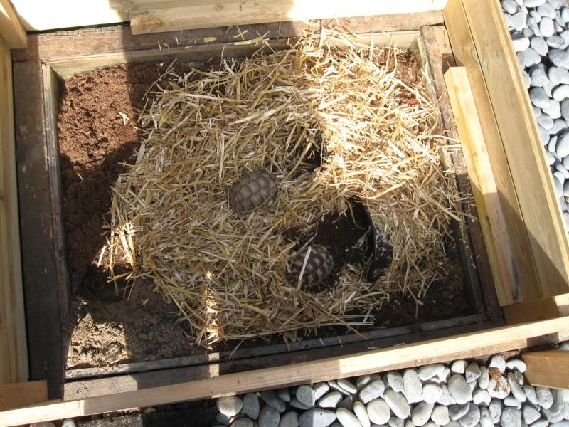 R alisation pas pas d 39 un parc tortues s curis for Avoir une tortue a la maison