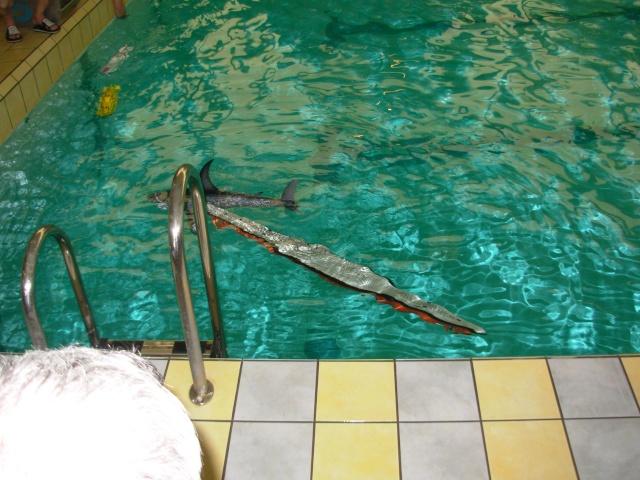 Les antilles de jonzac 2012 page 2 for Accessoires piscine jonzac