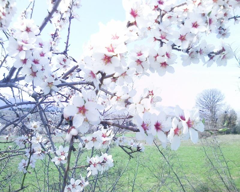 Fiori di tutti i tipi e colori for Tipi di fiori