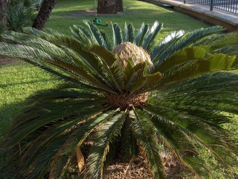 Quelques plantes exotiques for Plantes exotiques