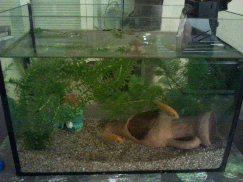 Nano aqua de 20 l for Quoi mettre aquarium poisson rouge
